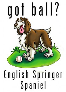 eglish springer spaniel