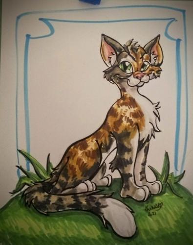 quick sketch cat